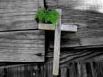 cruz efects