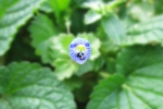 Flor insectos